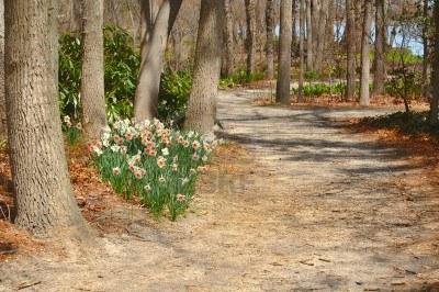 pathway